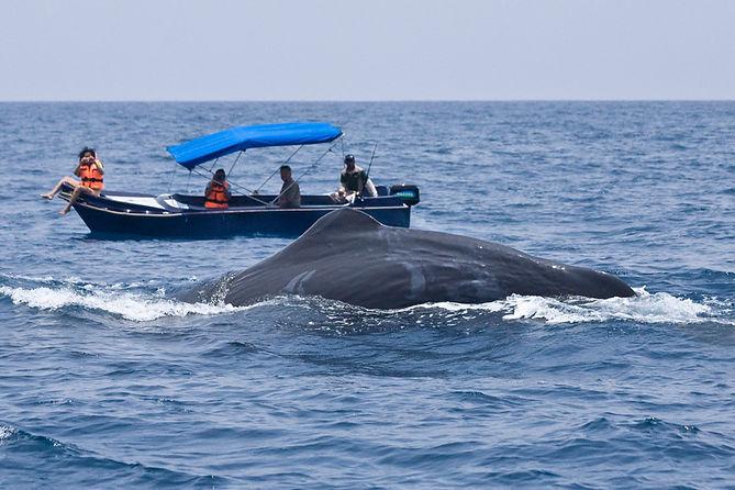 20130413_119 sperm whale.jpg