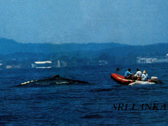 Pioneer Commercial Whale Watching in 1980s