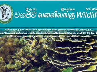 Sri Lankan Wildlife Journal on Marine Life