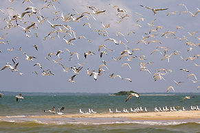 Neritic seabirds Sri Lanka's Amazing Maritime