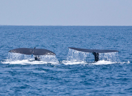Whales In The Harbour: A Memorable Experience In Trincomalee