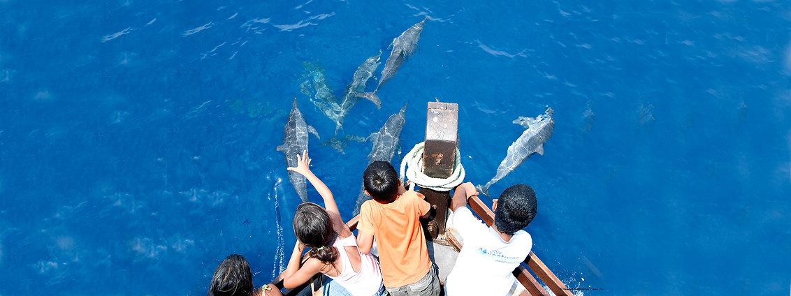 Spinner dolphins Kalpitiya