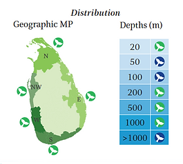 Indian Ocean bottlenose dolphin geographical and depth distribution