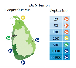 Striped dolphin geographical and depth distribution