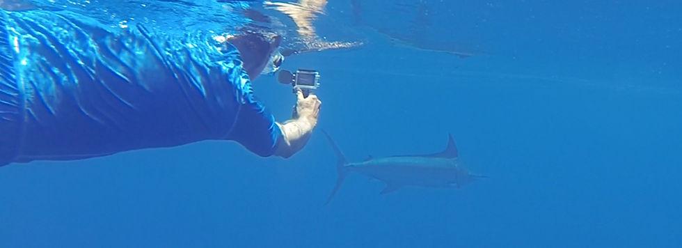 Marlin 1.jpg