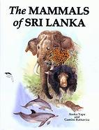 Marine Mammals of Sri Lanka's Amazing Maritime