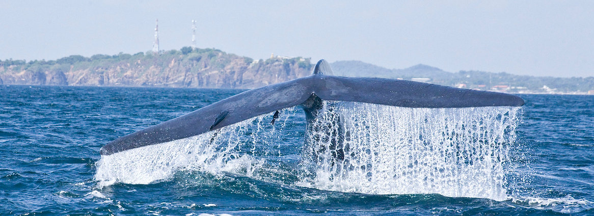Blue whale watching Trincomalee