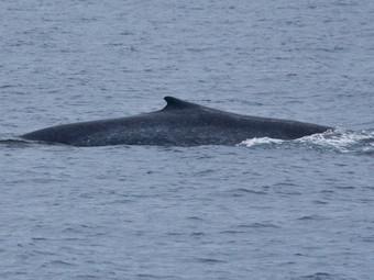 Blue Whale at 12 O'clock!