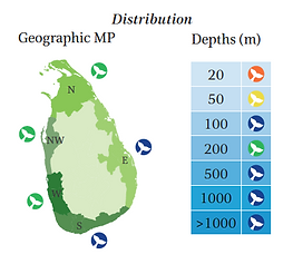 Bryde's whale geographical and depth distribution