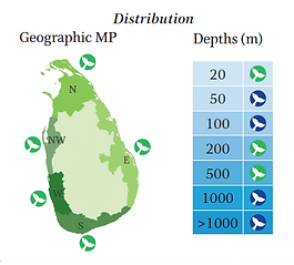 Bottlenose dolphin geographical and depth distribution