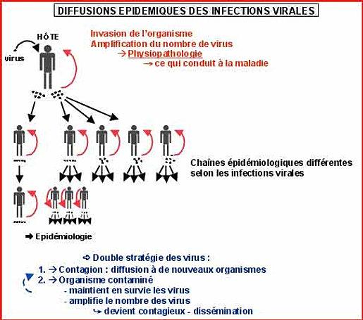 Tpe Les Dangers Du Tatouage Infections Et Transmission