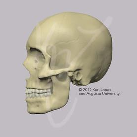 Skull Left