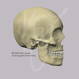 Skull Right