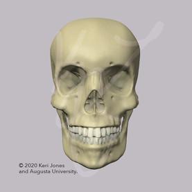 Skull Anterior