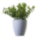 plant-png-image-potted-flower-4.png