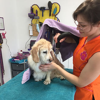 Senior dog care patient groomer