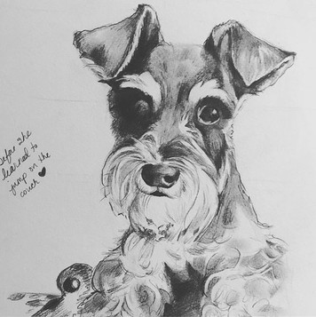 """$50 8""""x10"""" or 10""""x10"""" Pet Portrait - black and white pencil drawing using your photo"""