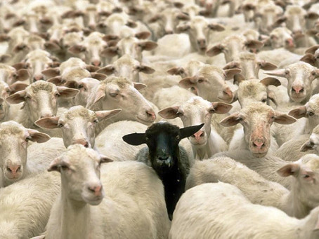 "Be The ""Black Sheep"""