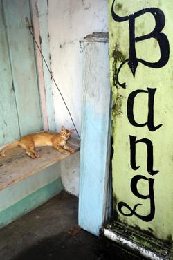 bang cat