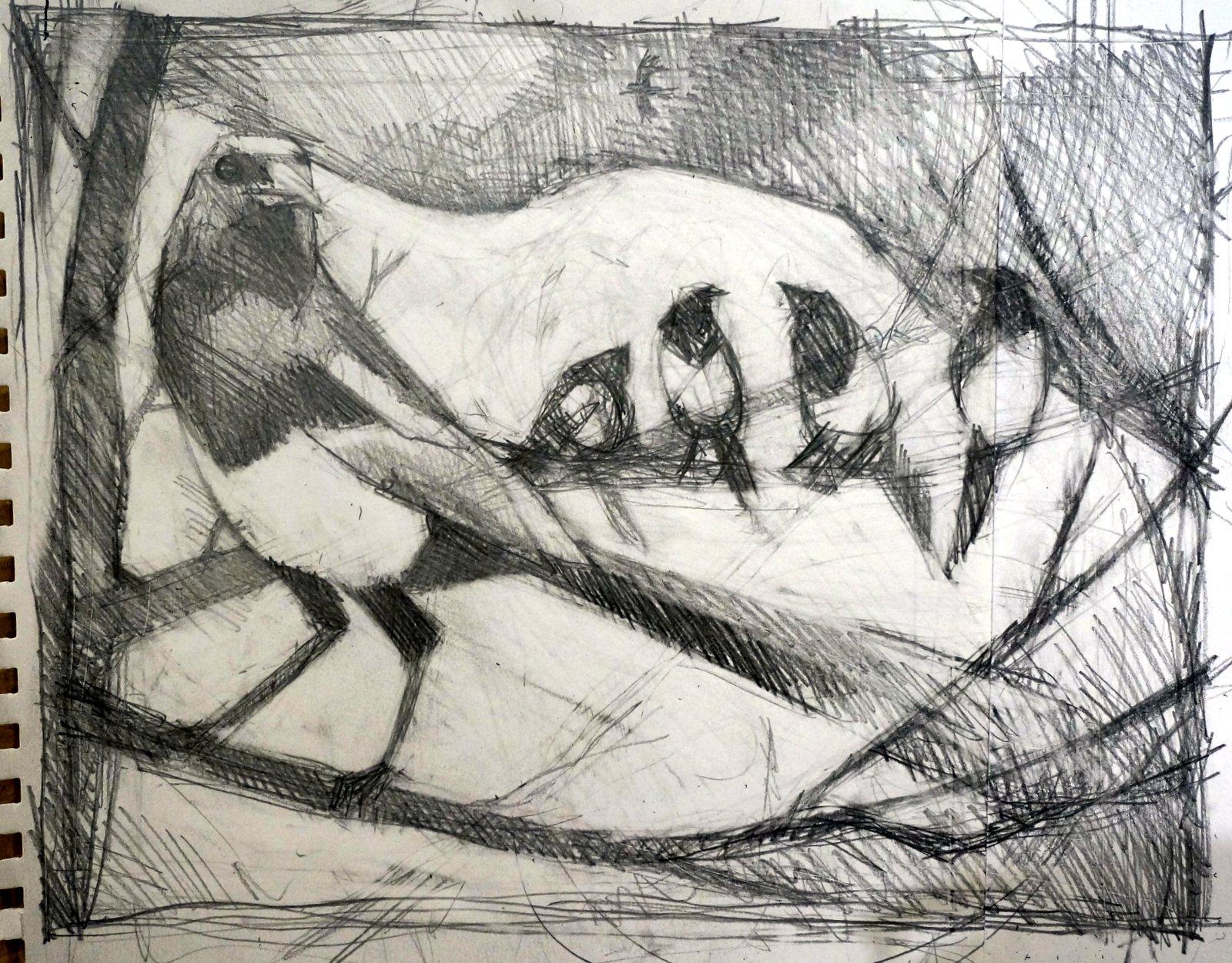 magpie silver sketch