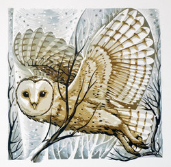 Barn Owl, winter branches