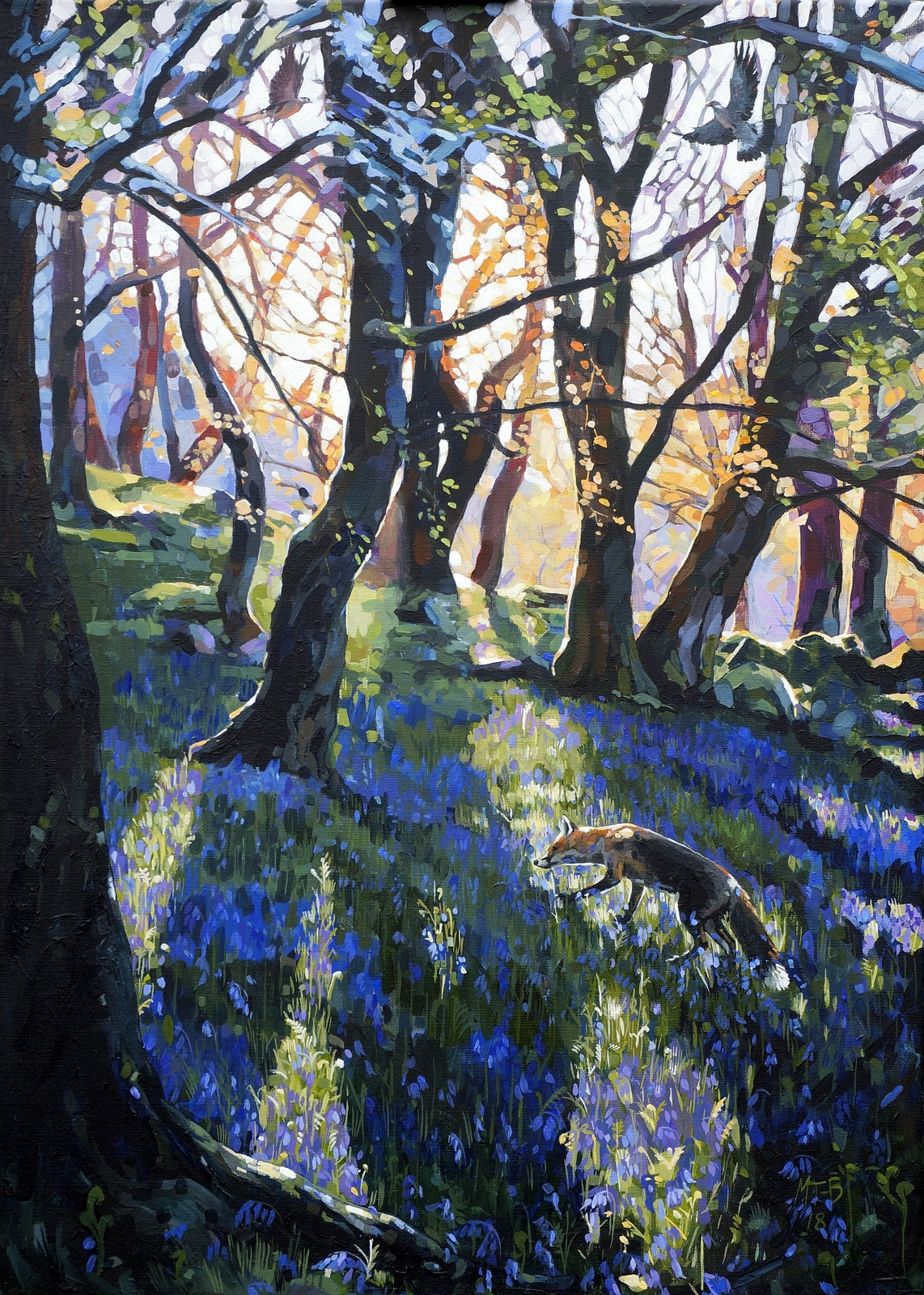 Fox, bluebells