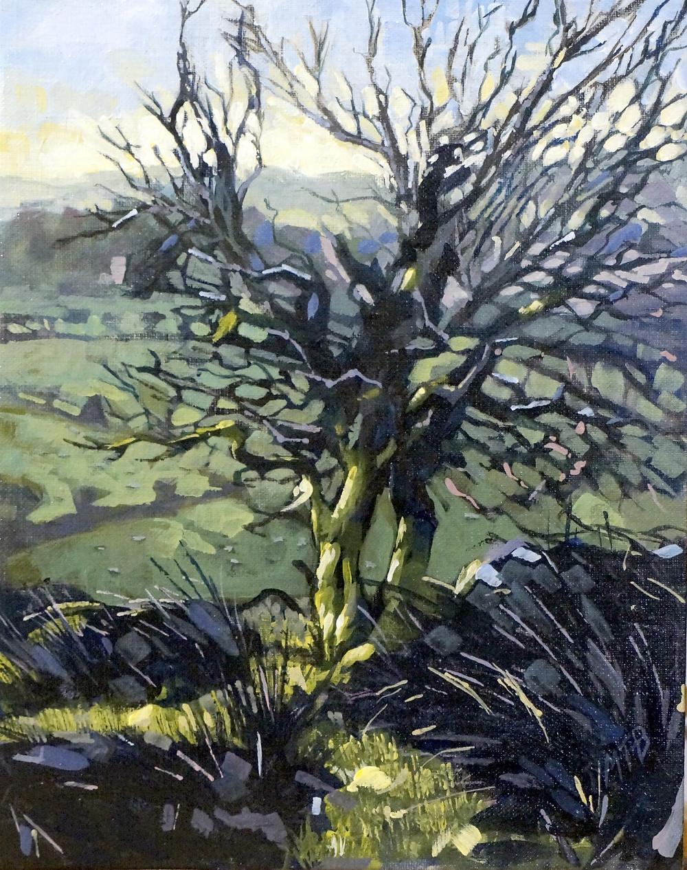 Tree over Craig y Cilau. Acrylic on linen on board 26x20cm.