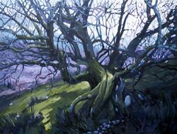 Twisting tree on Llangattock Mountai