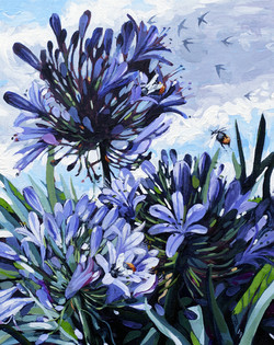 Agapanthus and Orange Bumble bees