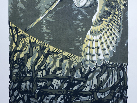Barn Owl and Winter Hedgerow