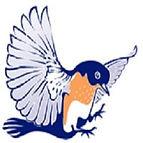 blue bluebird.jpg