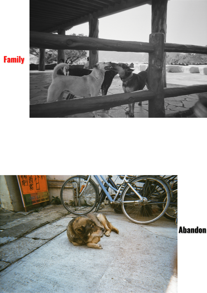 3. Give Dogs A Inclusive Home