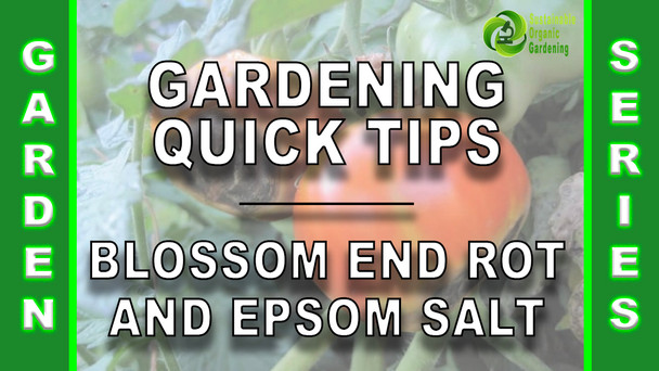 #148 - Gardening Quick Tips - Blossom End Rot & Epsom Salt