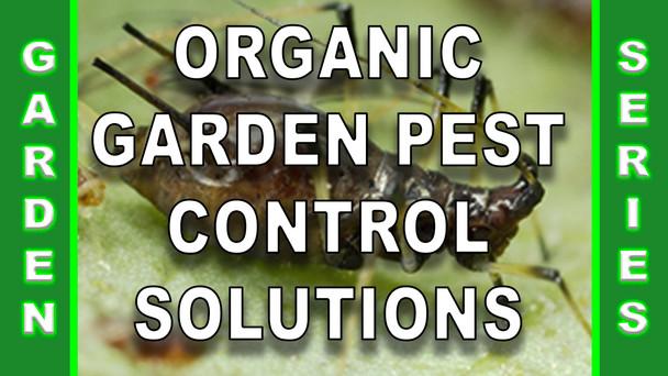 #137 - Organic Garden Pest Control Solutions