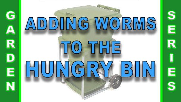 #125 - Adding Worms to the Hungry Bin
