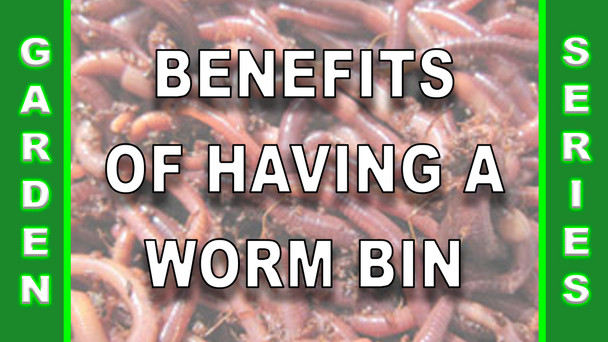 #120 - Benefits Of Having A Worm Bin