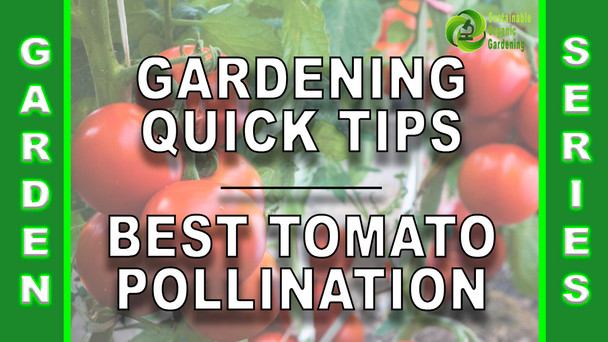 #147 - Gardening Quick Tips - The Best Tomato Plant Pollination Method