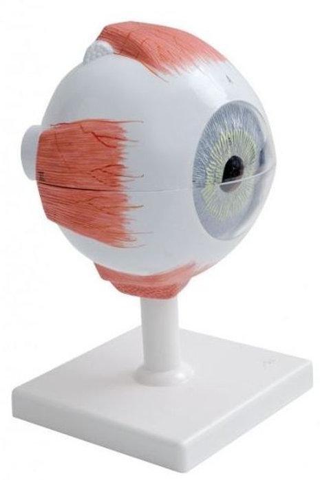 Kit Modèle de l'oeil