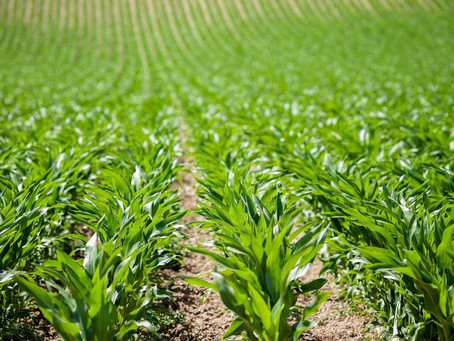 Best Practices for Variable Rate Seeding Pt. 2 - Populate Zones
