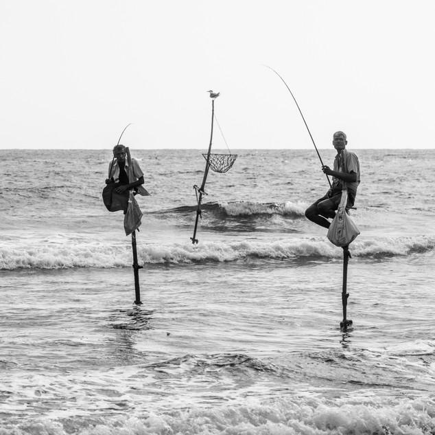 the famous stilt fisherman