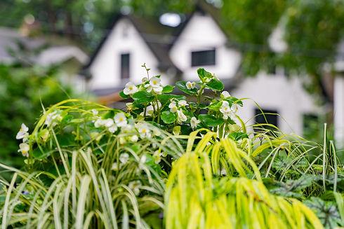 gardensByMardi_20200727-58.jpg