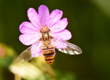 Visites sur les fleurs et les pollinisateurs