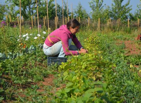 Lumbrikina, le renouveau à la coopérative Climax Perma-coop à Messancy