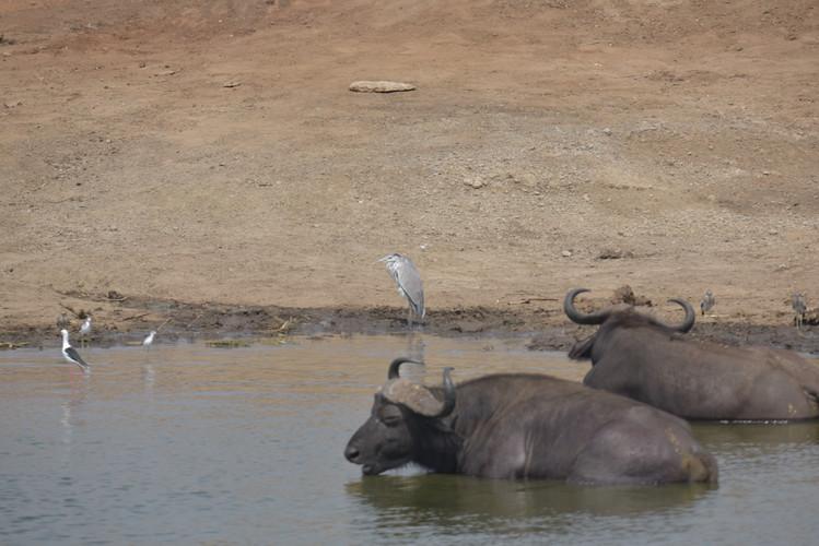 Queen Elizabeth NAtional Park   Wild Troopers safari company