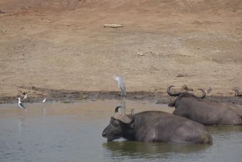 Queen Elizabeth NAtional Park | Wild Troopers safari company