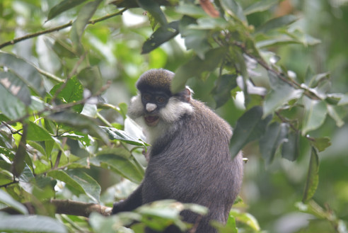 Primate life | Bwindi Forest | Wild Troopers