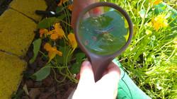 חוקר צעיר בחצר הגן