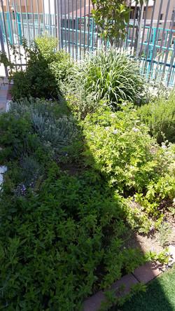 פינת תבלינים ןצמחי מרפא בחצר