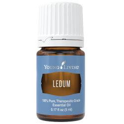 Ledum Essential Oil
