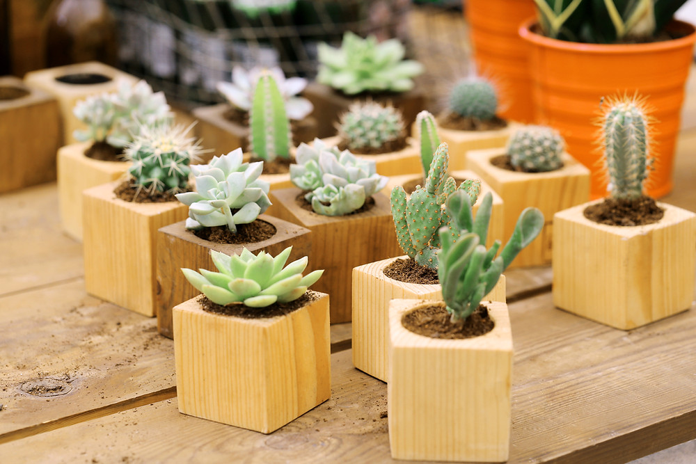 cacti humidity absorbing indoor plants